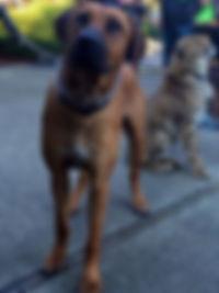K9-Behavior Company   Private Dog Training   In-Home Dog Training   One-on-One Dog Training   Solve Dog Behavior Problems   Reward-Based Methods