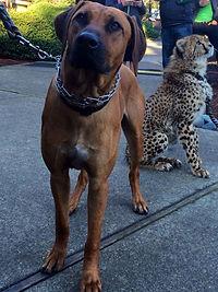 K9-Behavior Company | Private Dog Training | In-Home Dog Training | One-on-One Dog Training | Solve Dog Behavior Problems | Reward-Based Methods