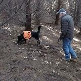 K9-Behavior | Truffle Training | Truffle Dog | Train Your Dog to Hunt Truffles | Truffle Hunting Dog | Dig | Train Your Dog to Forage for Truffles