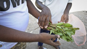 [Jeune Afrique] - Paris - enquête sur le trafic du khat, psychotrope prisée dans la Corne d'Afrique