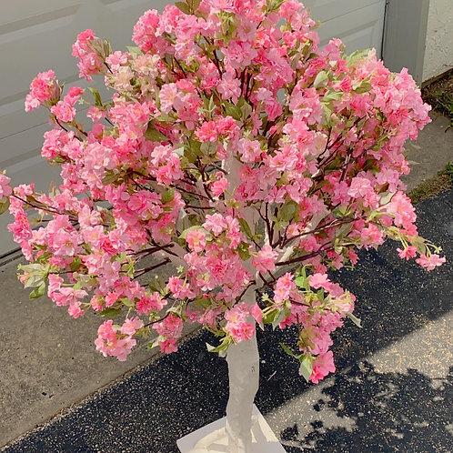 Ava Cherry Blossom Trees