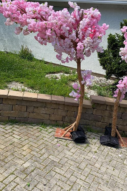 Eva Cherry Blossom Trees