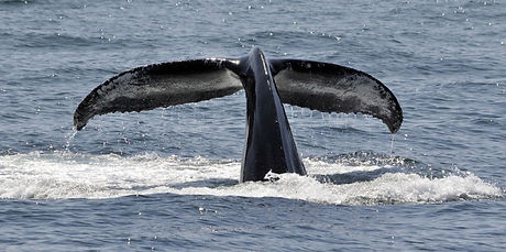 Whale%20Research_edited.jpg