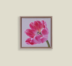 Small Pink Parrot Tulip