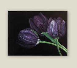 Damson Tulips