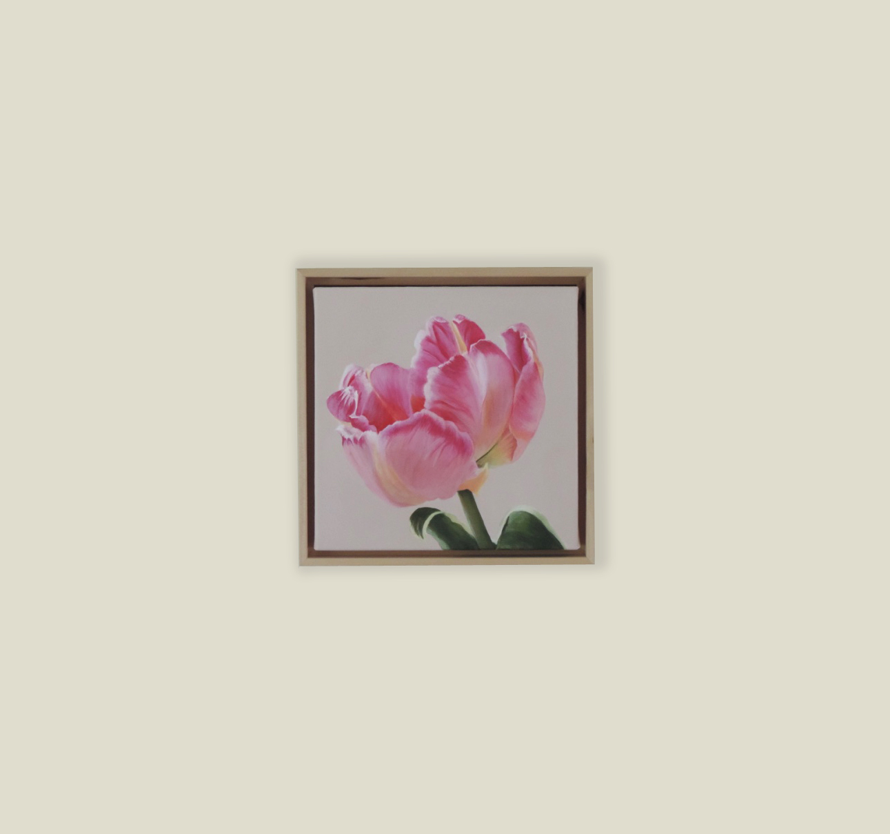 Small Pink Parrot Tulip II