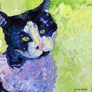 171227 susan jefferson cat.jpg