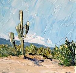 130409 B saguaro  copy