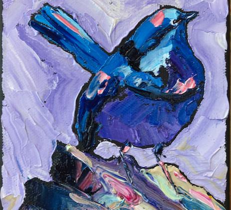 B200518E australian fairy wren 5x7.jpeg