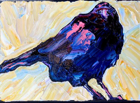 B200101 raven.jpeg