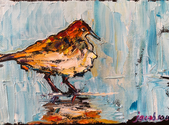 B200423 sanderling 5x7.jpeg