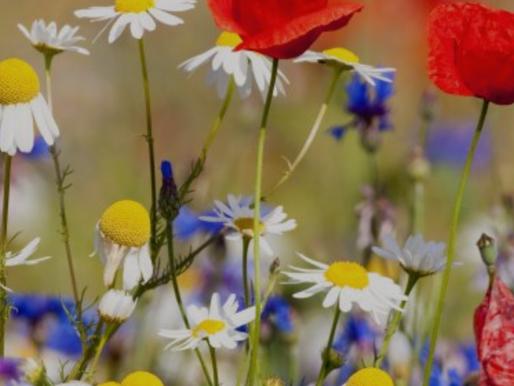 5 tips voor een biodiverse tuin (of bedrijfsbos)