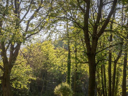 Lokale ondernemers nemen het voortouw om méér bos te creëren in tal van Vlaamse steden en gemeenten