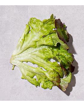 Mimosa 3.png