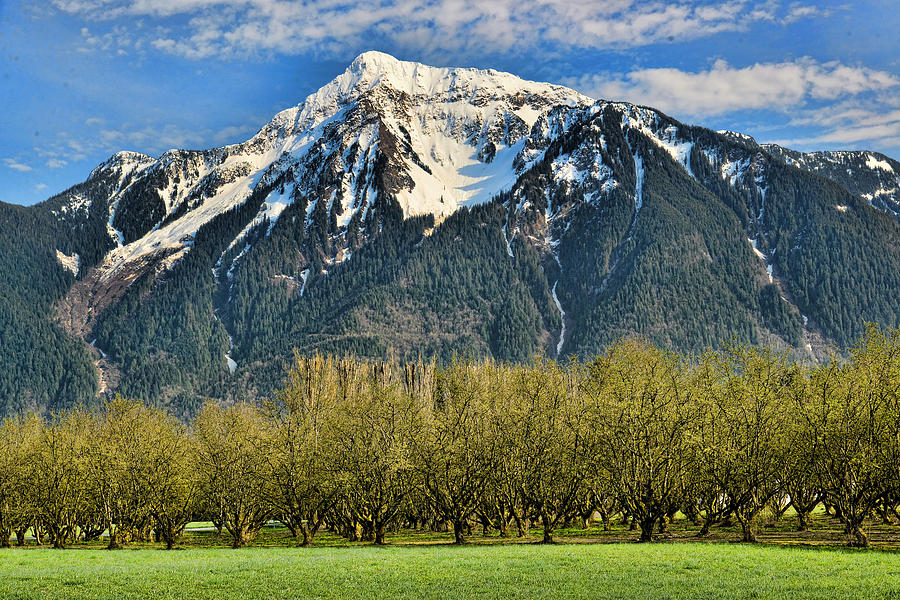 mount-cheam-from-the-hazlenut-grove-agassiz-bc-lawrence-christopher