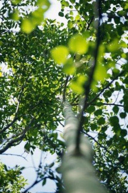 Tall tree trunk.jpg