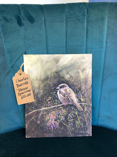 """House Sparrow"" By Charles Barrett"