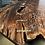 Thumbnail: Claro Walnut burl Coffee Table | Brass Keys