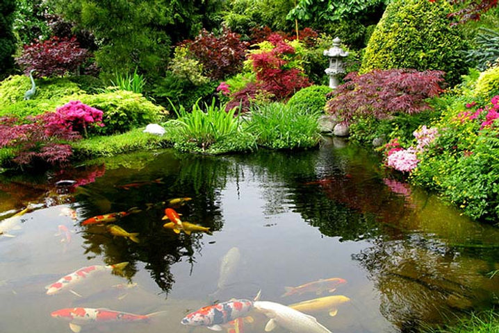 asian-garden-koi-fish-pond.jpg