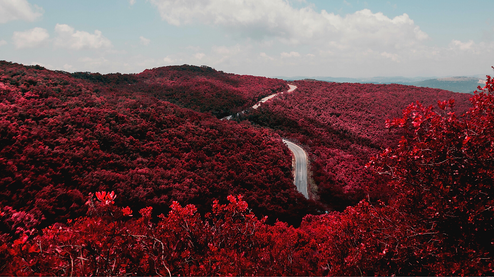 Copy of Red Scenic Floral Landscape YouT