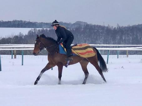 Snowy gallops