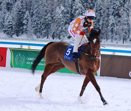 Sheikh The Reins in St Moritz