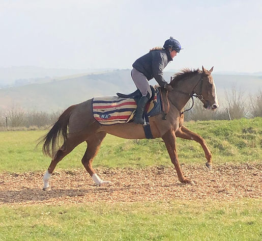 Triptothecity gallops.JPG