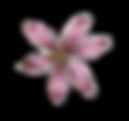 ピンクの花イラスト