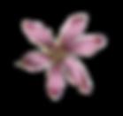 Rosa Illustrated Blume