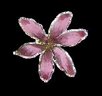 Pink Illustrated Flower