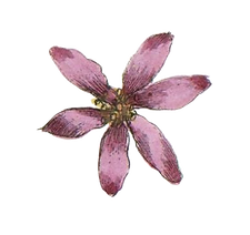 Pink Illustrated Flower