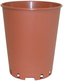 VASO%20ROSE%20COCCIO_edited.jpg