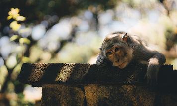 Lonely monkey.jpeg