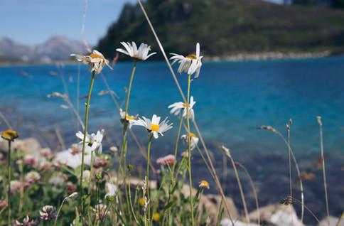 Switzerland-travel-summer-lake.jpg