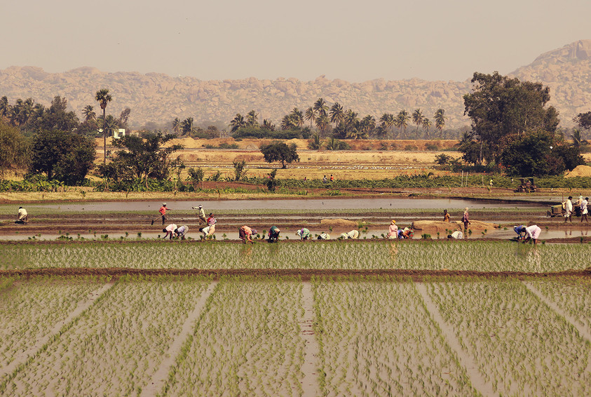Agriculure India