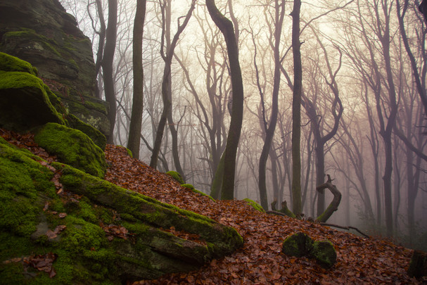 Luxembourg-Berdorf-forest