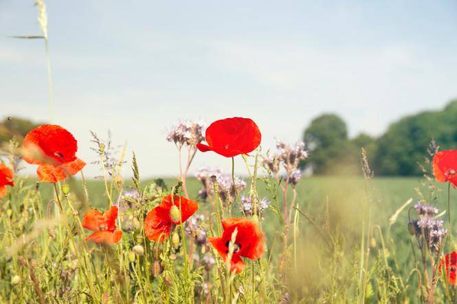 Switzerland-travel-summer-flowers.jpg