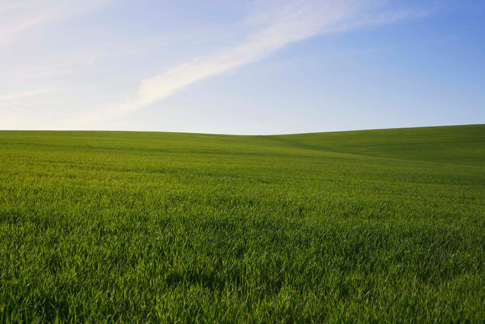 Green Grass-2.jpg