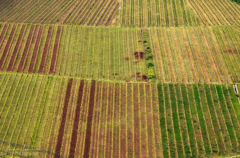 wine-fields-luxembourg.jpg