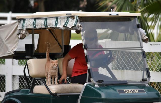 Uber cat
