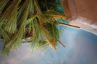 Les bains du lac Marie-Louise.jpg