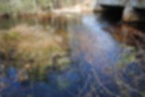Cedar Creek Weir 112012 (1).JPG