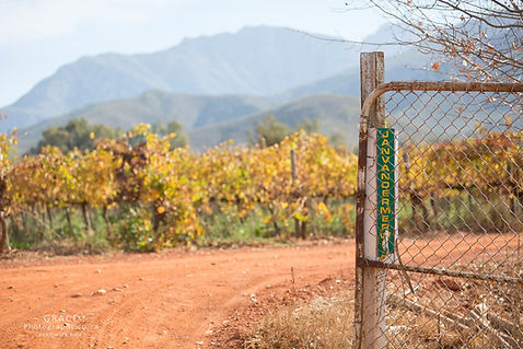 Vinyards Nuy valley South africa