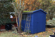 Shed and fence repaint