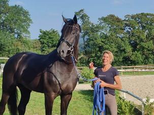 L'étalon Koning rejoint Stéphanie Brieussel