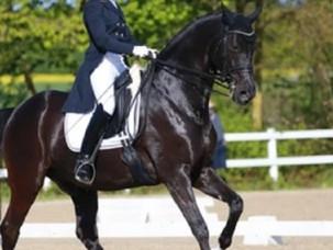 Plusieurs chevaux de dressage français positifs à la rhinopneumonie