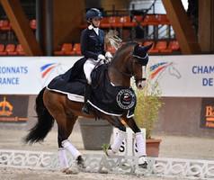 Charlotte Chalvignac Vesin : c'est un véritable honneur de représenter la race lusitanienne