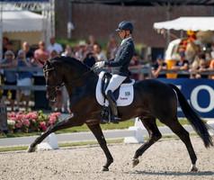 59 chevaux néerlandais toujours en lice pour les Championnats du Monde Jeunes Chevaux
