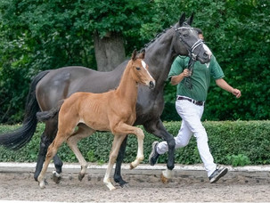 Succès internationalpour la vente Rhenania Horses x Ekestrian