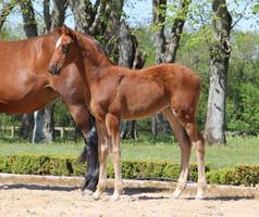 2  nouveaux propres frère et sœur du double Champion du Monde D'Avie naissent en France